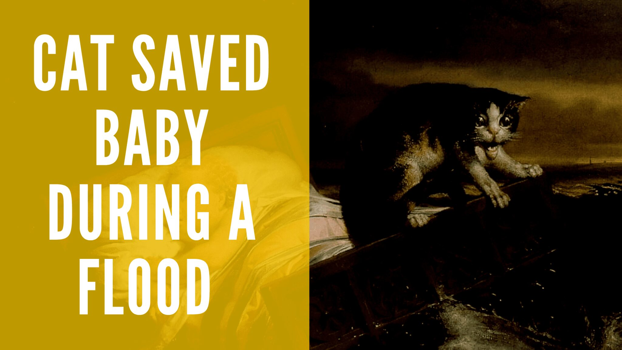 Photo of A cat saved life of a baby